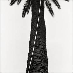 palm by nasht-01
