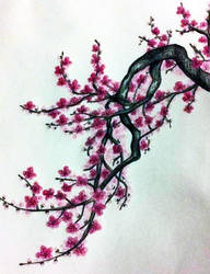 Cherry blossom by Decorum100