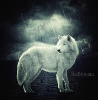 RainWolf by SadSonata