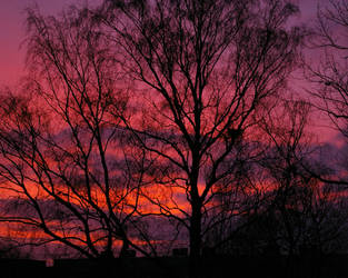 Red Sky in New years morning by janchux