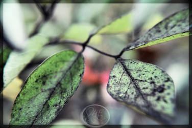 Leaves by Norble