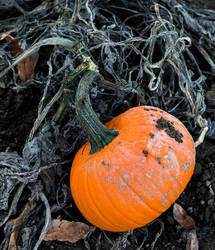 Pumpkin by silverlight-studio