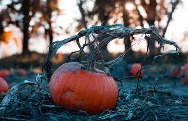 Sunset at the pumpkin patch by silverlight-studio