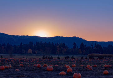 Sunset at the pumpkin patch (landscape) by silverlight-studio