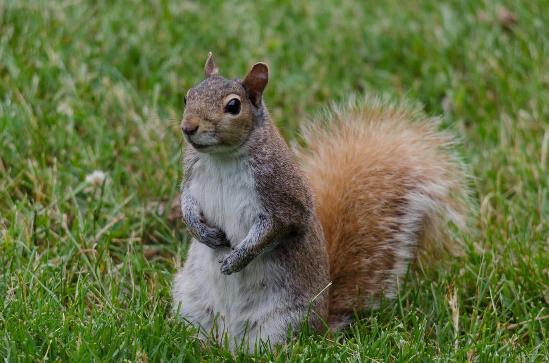 Squirrel Stock 5 by SabrinaFranek