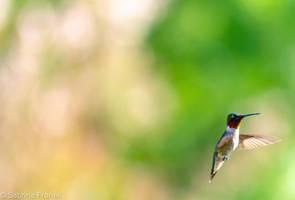 Looking for Nectar 1 by SabrinaFranek