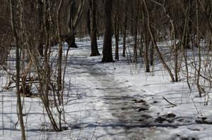 Winter Woodland Trail (Stock) by SabrinaFranek