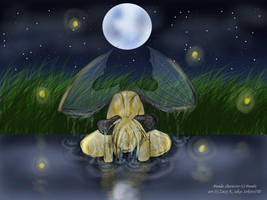 .:in the lit night:. by Sokoto