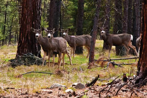 Oh, Deer by quintmckown