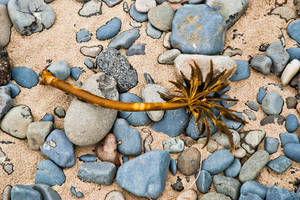 Kelp by quintmckown