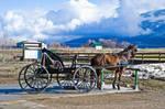 Montana Amish by quintmckown
