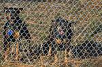 My watchdogs by quintmckown