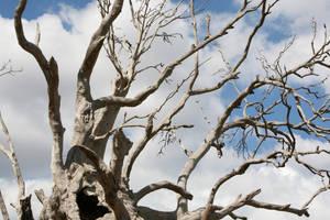 A Dead tree by Darkwolf78