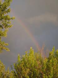 Rainbow by superpower-pnut
