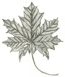 018-052  Simple maple leaf by sweetmarly