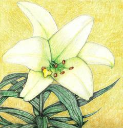 022-052 Raikan's Lily by sweetmarly