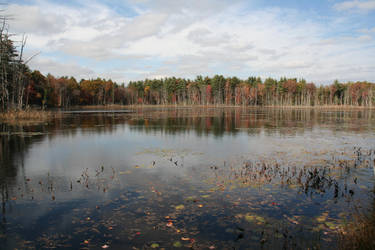 Tasseltop Pond, Douglas,  MA by dre4mass