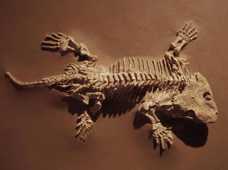 Seymouria Fossil Amphibian by Rhabwar-Troll-stock