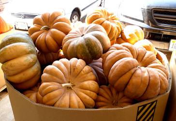 Fairytale Pumpkins by Rhabwar-Troll-stock