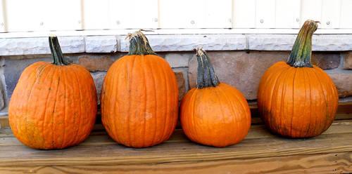 Pumpkins 1 by Rhabwar-Troll-stock