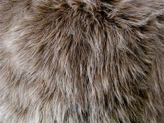 Shag Faux Fur 1 by Rhabwar-Troll-stock