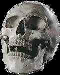 Wistful Human Skull Stock by Rhabwar-Troll-stock