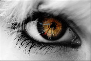 eye of the tiger by michelinka