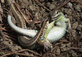 Reptile Battle by emreekinci