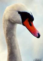 swan beauty by lisarime