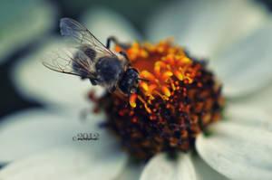 summer harvest closeup by lisarime