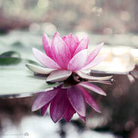 tranquility by lisarime