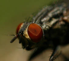 Fly on Bark 3 by CageyResources