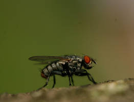 Fly on Bark 4 by CageyResources