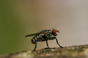 Fly on Bark 5 by CageyResources