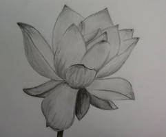 pencil of Lotus flower by 1koolwhip