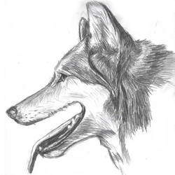 Wolf Profile by Wolf-Mage
