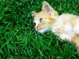 the Playfull kitten by solagratia