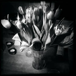 Tulips in a Coke glass by BoholmPhotography