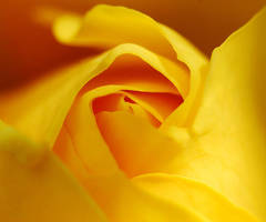 soft and yellow by augenweide