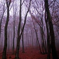 autumn mood by augenweide