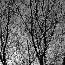 phantasm by augenweide