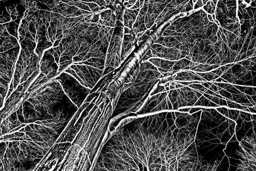 crown canopy by augenweide
