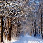 remember last winter by augenweide