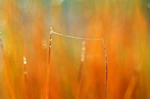 high wire by augenweide