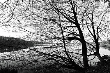 alone at the lake by augenweide