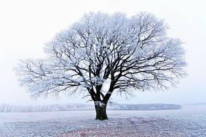 winter dream by augenweide
