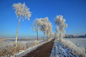 winter field by augenweide