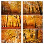 beechforest in autumn by augenweide