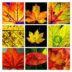 colours of autumn by augenweide
