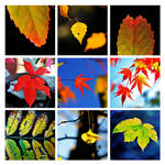 autumn leaves 2 by augenweide
